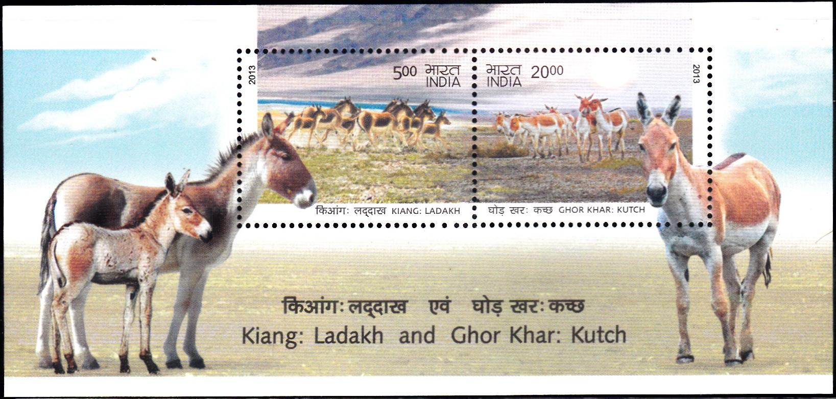 Indian Wild Asses : Gorkhar and Ghudkhur