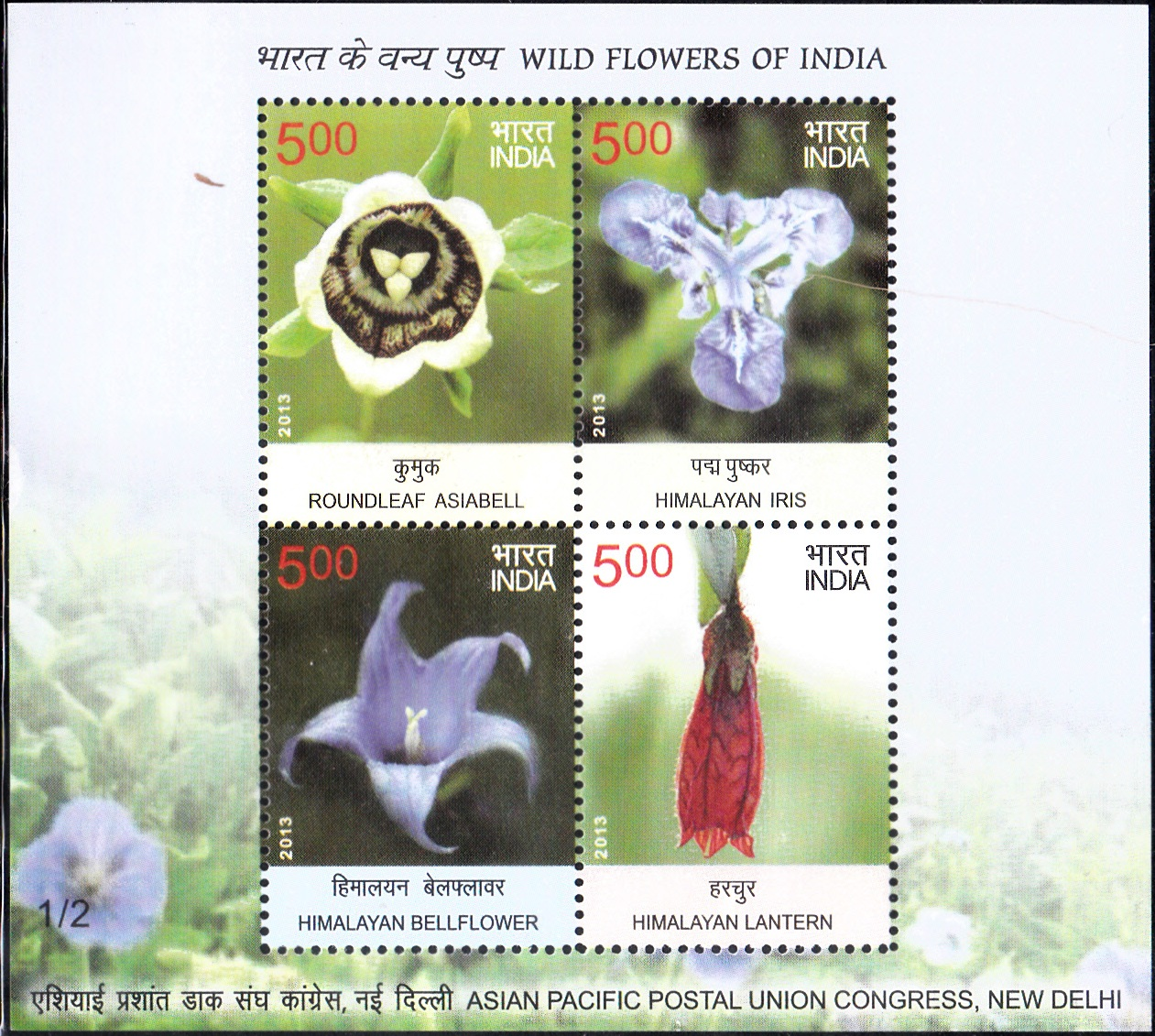 Roundleaf Asiabell, Himalayan Iris, Himalayan Bellflower & Himalayan Lantern