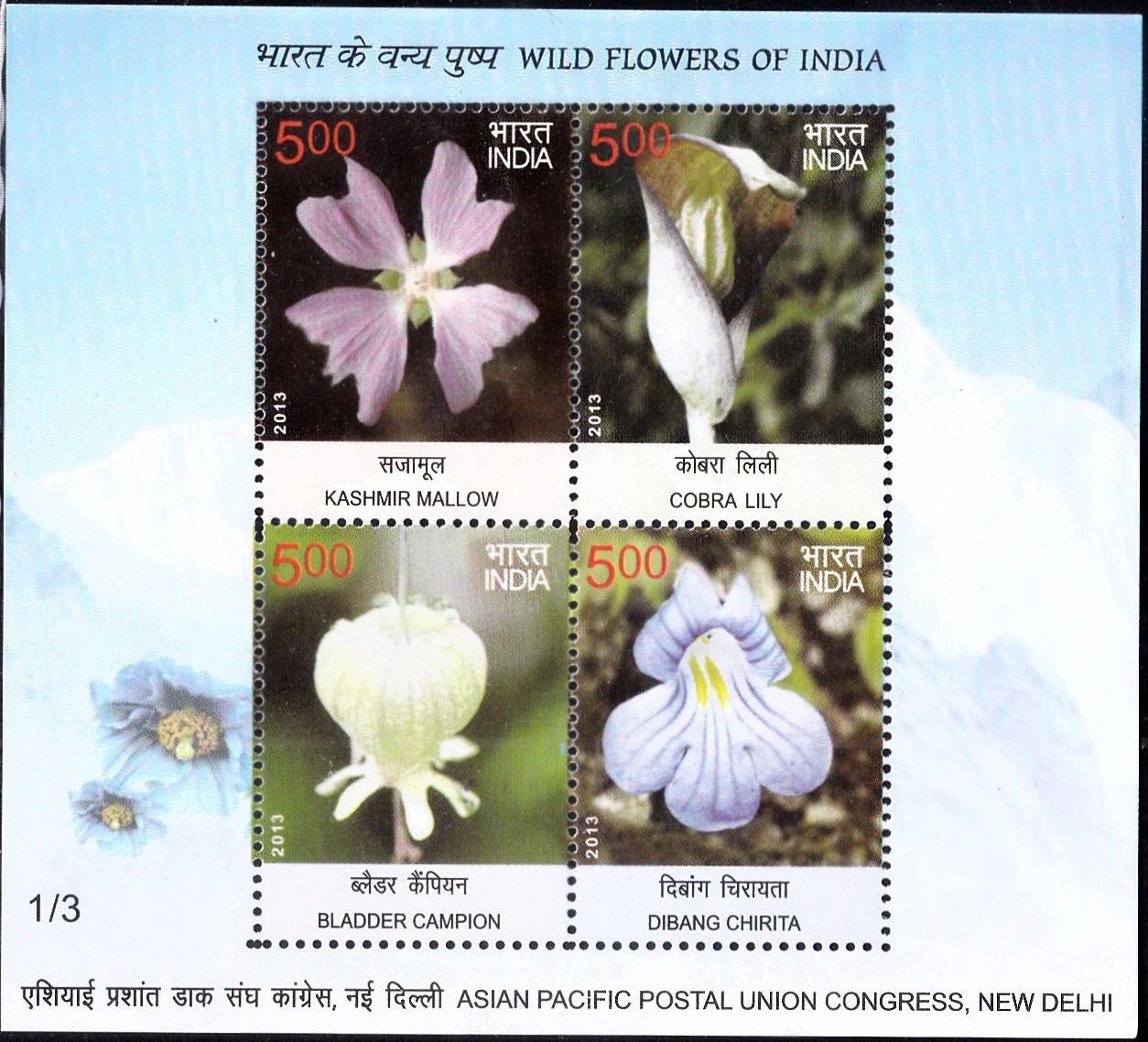 Kashmir Mallow, Cobra Lily, Bladder Campion & Dibang Chirita