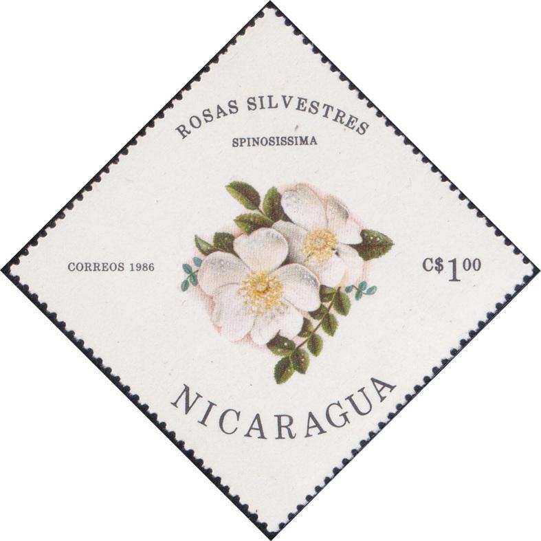 1494 Spinosissima (Rosas Silvestres) [Nicaragua Diamond Stamp 1986]