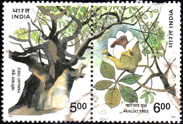 Pariyat tree (Kantur)