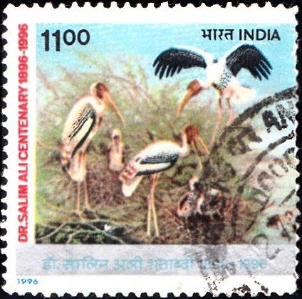 Storks at Nest in Bharatpur Bird Sanctuary