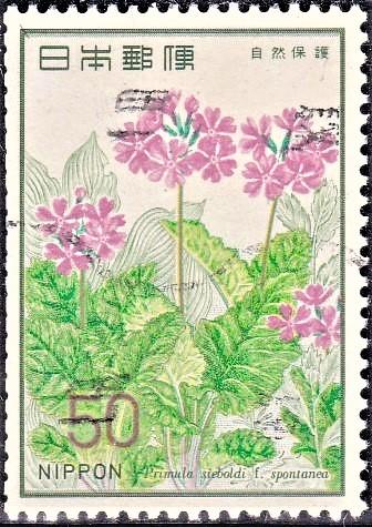 Sakurasou Flower