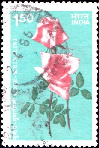 Mrinalini (मृणालिनी) Rose