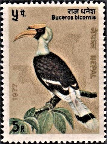Great Pied Hornbill : Himalayan Bird