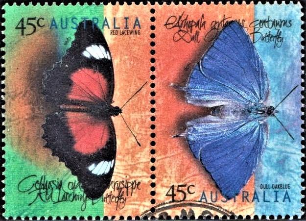 Cethosia biblis and Papilio ulysses