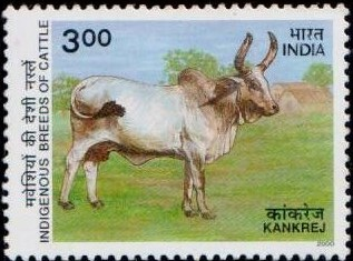 Cow : Kankaraj