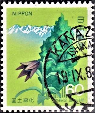 Mount Haku (White Mountain), Thujopsis and Black Lily Flower