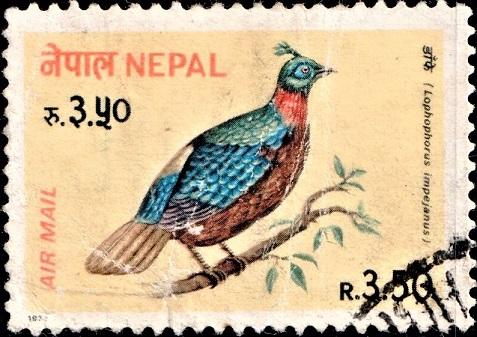 Himalayan monal : Nepal Air Post Stamp 1979